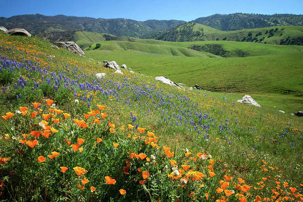 Photograph - Wildflowers Along Bear Mountain Road by Lynn Bauer