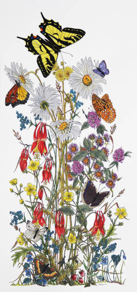 Cabbage White Painting - Wildflowers And Butterflies Of The Valley by Stanza Widen