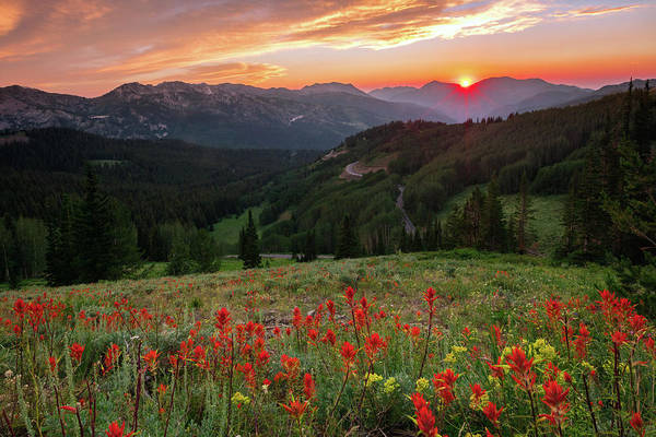 Wildflowers At Gaurdsmans Pass Art Print