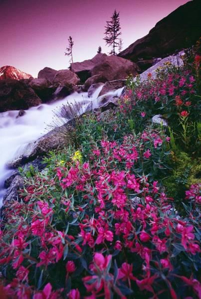 Bugaboo Photograph - Wildflowers, Bugaboo Provincial Park by Bilderbuch