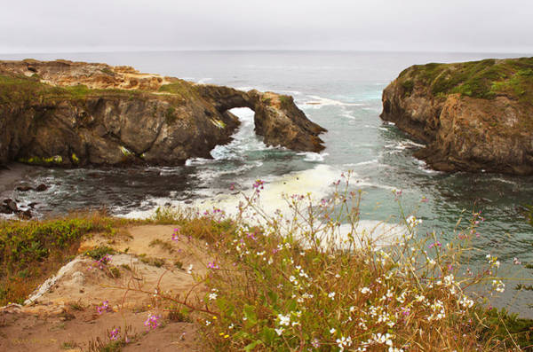 Photograph - Wildflowers By The Ccean - Mendocino by Susan Vineyard