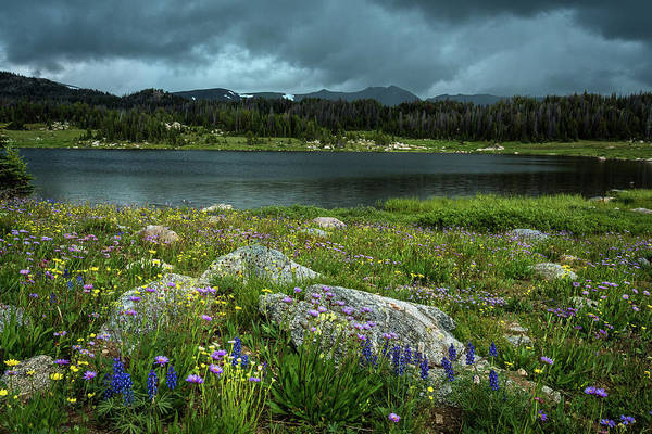 Photograph - Wildflowers By The Lake by Rick Strobaugh