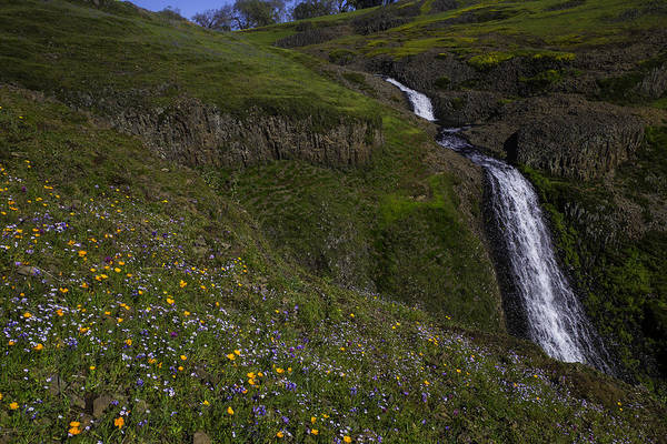 Table Mountain Wall Art - Photograph - Wildflowers By Waterfall by Garry Gay