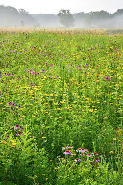 Photograph - Wildflowers Galore In Chain-o-lakes Sp by Ray Mathis