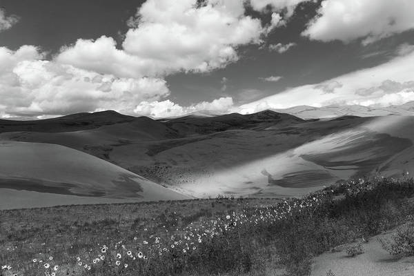 Photograph - Wildflowers, Great Sand Dunes, Black And White by TM Schultze
