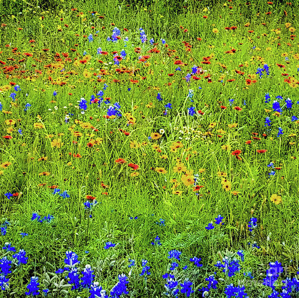 Photograph - Wildflowers In Bloom by D Davila