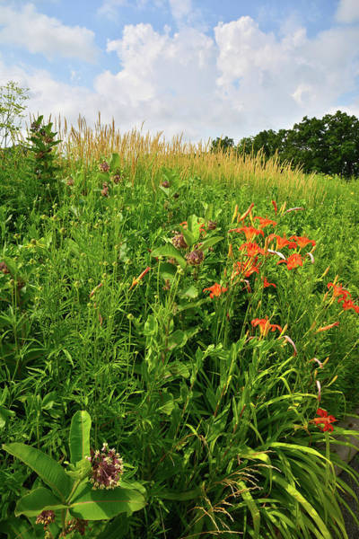Photograph - Wildflowers In Happy Valley Conservation Area by Ray Mathis