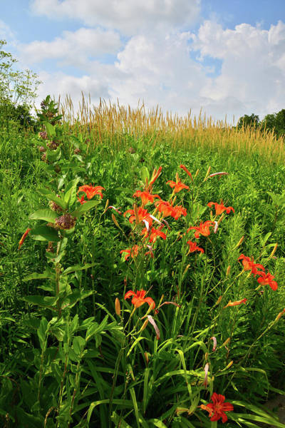 Photograph - Wildflowers In Happy Valley Preserve by Ray Mathis