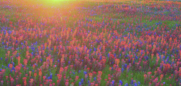 Photograph - Wildflowers In Texas by Robert Bellomy