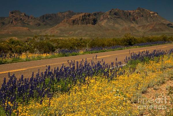 Photograph - Wildflowers In The Chisos Mountains by Adam Jewell