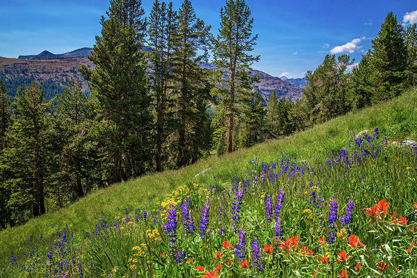 Photograph - Wildflowers In Yosemite's Hanging Garden by Lynn Bauer