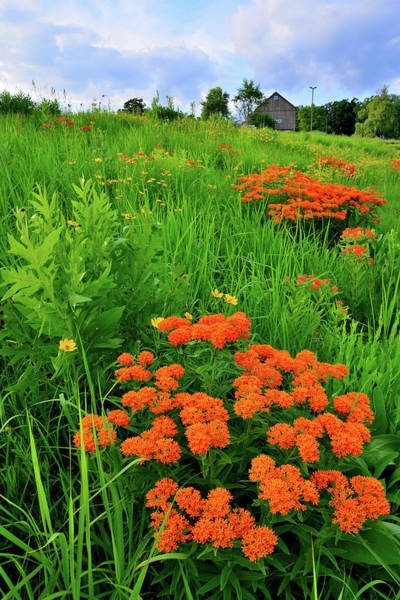 Photograph - Wildflowers Near Wheeler Barn In Glacial Park by Ray Mathis
