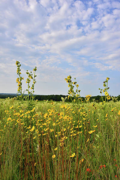 Photograph - Wildflowers Of Marengo Ridge Conservation Area by Ray Mathis