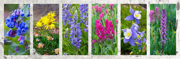 Photograph - Wildflowers Of The Rocky Mountains by Aaron Spong