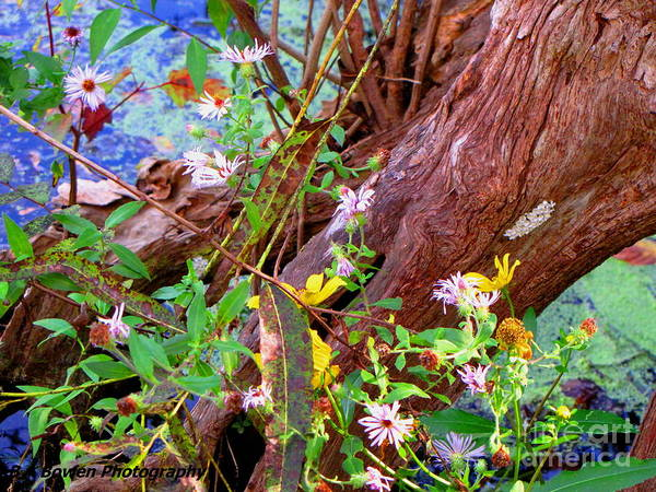 Wildflowers On A Cypress Knee Art Print