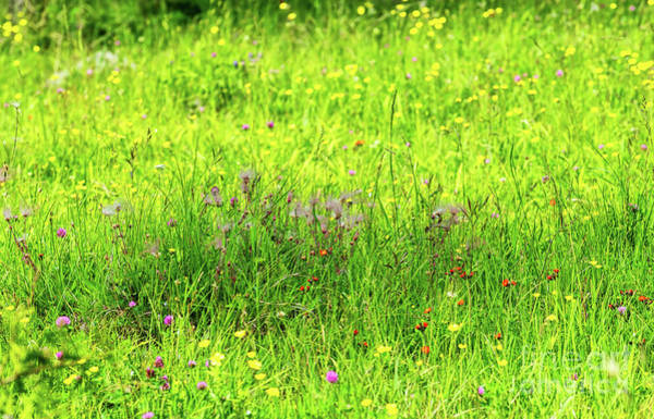 Photograph - Wildflowers On A Meadow by Les Palenik