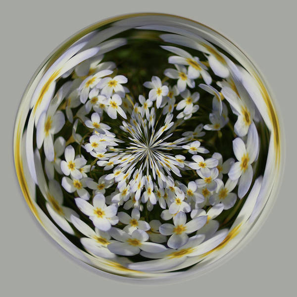 Photograph - Wildflowers Orb by Bill Barber