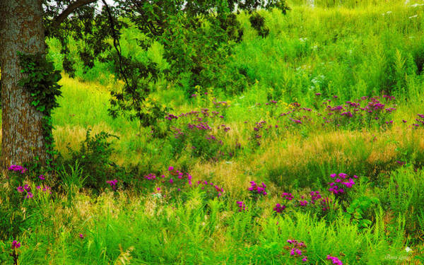 Photograph - Wildflowers Prairie by Anna Louise