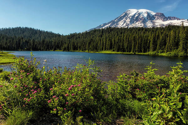Photograph - Wildlflower Color By Reflection Lake And Mt Rainier, No. 1 by Belinda Greb