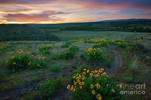 Wall Art - Photograph - Wildlflower Trail by Mike Dawson