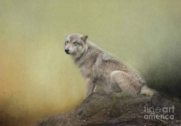 Wildlife Alaska Art Print