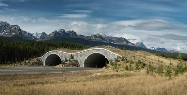 Wall Art - Photograph - Wildlife Crossing Over The Trans Canada Highway by Steve Gadomski