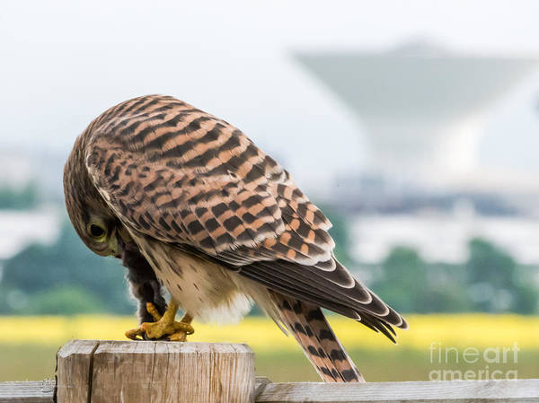 Photograph - Wildlife In The City by Torbjorn Swenelius