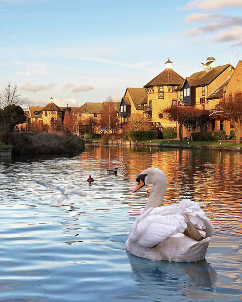 Photograph - Wildlife On The River by Gill Billington