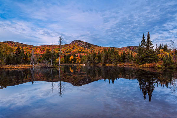 Photograph - Wildlife Pond Autumn Reflection by Jeff Sinon