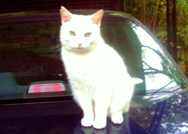 Photograph - Will Wash Car For Treats by Denise F Fulmer