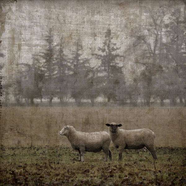 Square Photograph - Willamette Valley Oregon by Carol Leigh