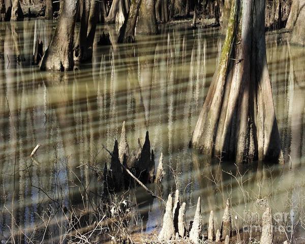 Photograph - William B Clark Conservation Area Rossville Tn 1 by Lizi Beard-Ward