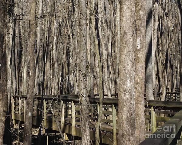 Photograph - William B Clark Conservation Area Rossville Tn 2 by Lizi Beard-Ward