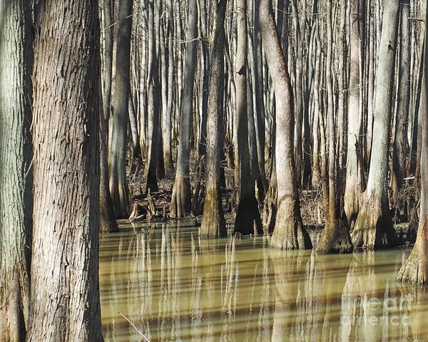 Photograph - William B Clark Conservation Area Rossville Tn 3 by Lizi Beard-Ward