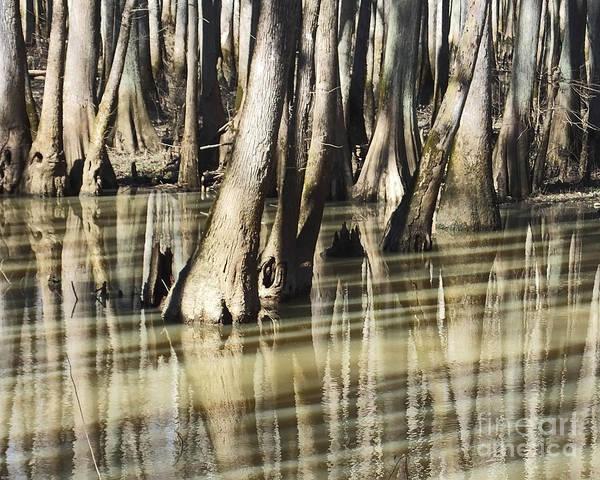 Photograph - William B Clark  Conservation Area Wolf River Rossville Tn 5 by Lizi Beard-Ward