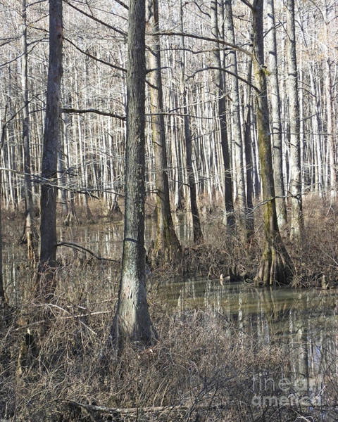 Photograph - William B Clark Conservation Area Wolf River Rossville Tn 6 by Lizi Beard-Ward