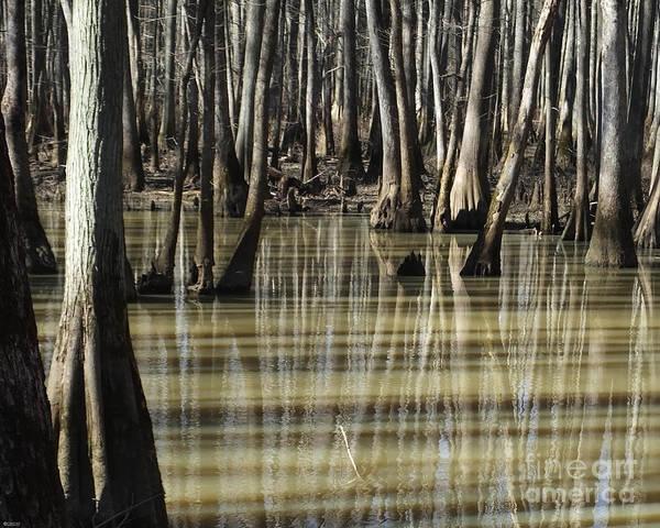 Photograph - William B Clark Conservation Area Wolf River Rossville Tn 9 by Lizi Beard-Ward