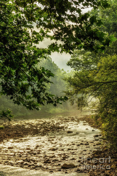 Photograph - Williams River In Morning Light by Thomas R Fletcher