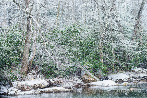 Photograph - Williams River Snowfall by Thomas R Fletcher