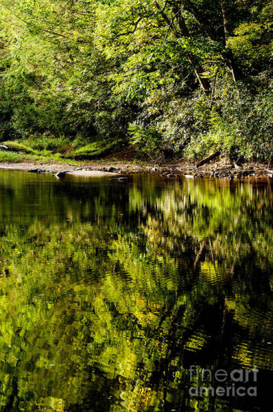 Allegheny Mountains Wall Art - Photograph - Williams River Summer  by Thomas R Fletcher
