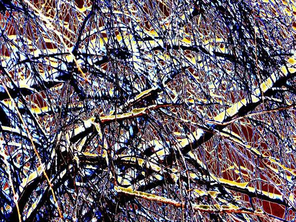Photograph - Willow Abstract by Beth Akerman