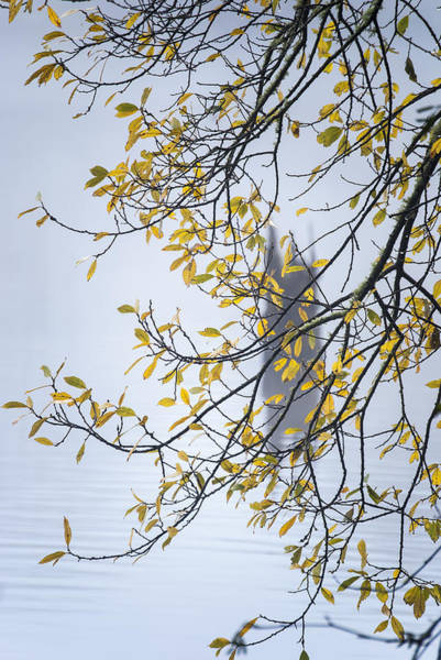 Photograph - Willow And Fog by Robert Potts