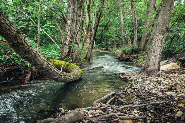 Photograph - Willow Creek by Lee Harland