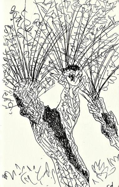 Drawing - Willow In Coswig by Chani Demuijlder