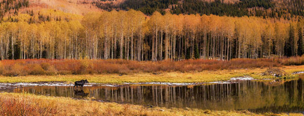 Photograph - Willow Lake Pano by Ryan Moyer