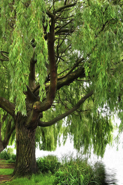Willow Photograph - Willow by Mark Rogan