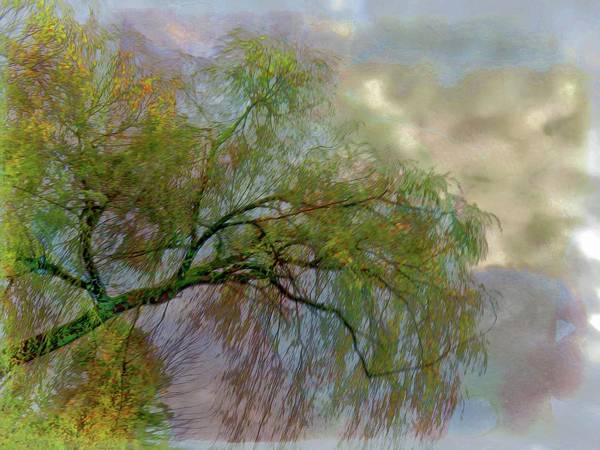 Photograph - Willow Tree by Phyllis Meinke
