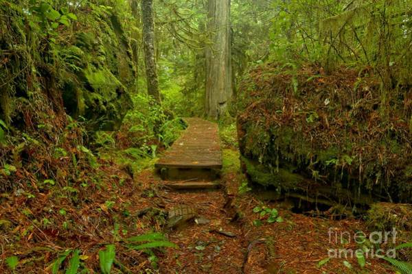 Photograph - Willowbrae Rainforest Pathway by Adam Jewell