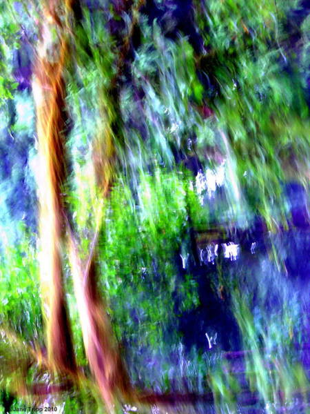 Wall Art - Photograph - Willows by Jane Tripp