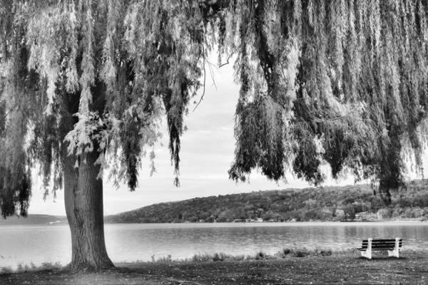 Weeping Willow Wall Art - Photograph - Willows Of Lake Cayuga by Jessica Jenney